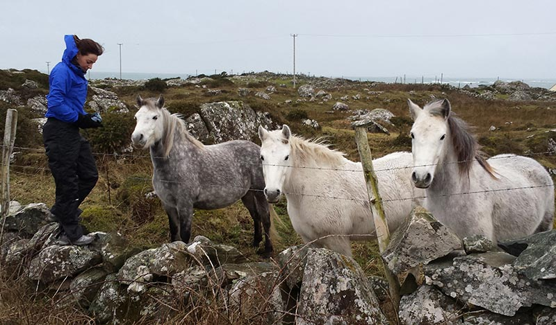 Horses in Roundstone, Connemara