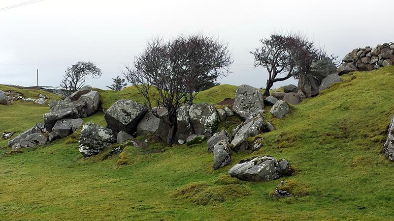 Windswept Hawthorn Tree, Connemara, Ireland